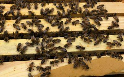 Mourning Honey